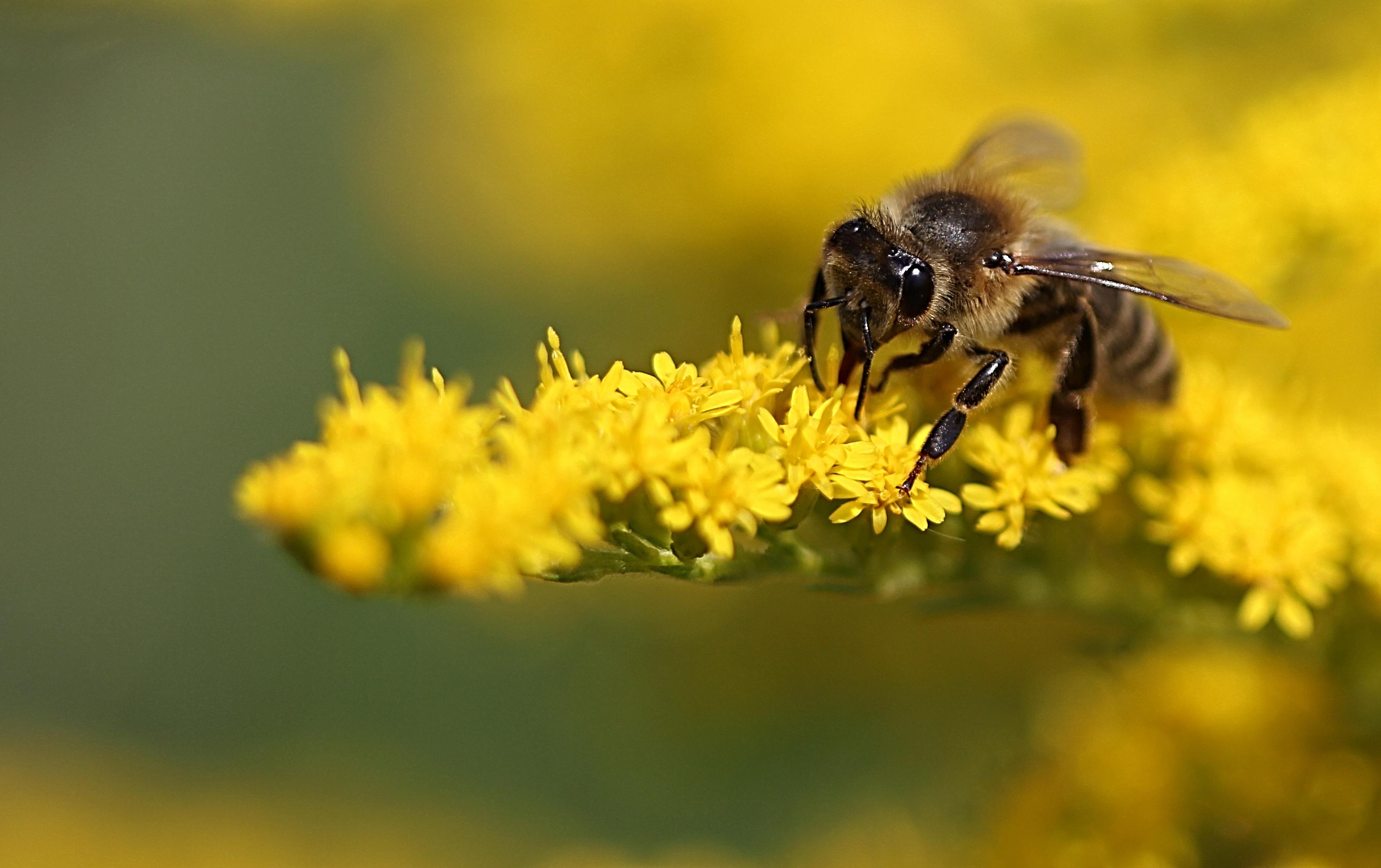 Les pesticides, une vérité et des enjeux