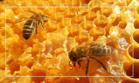 beesolis-ruche-pedagogique-2